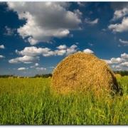 В Исилькульском районе завершили заготовку сена