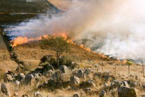В одном из районов Омской области установлен высший уровень пожарной опасности