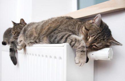 Омичи массово жалуются на холод в квартирах